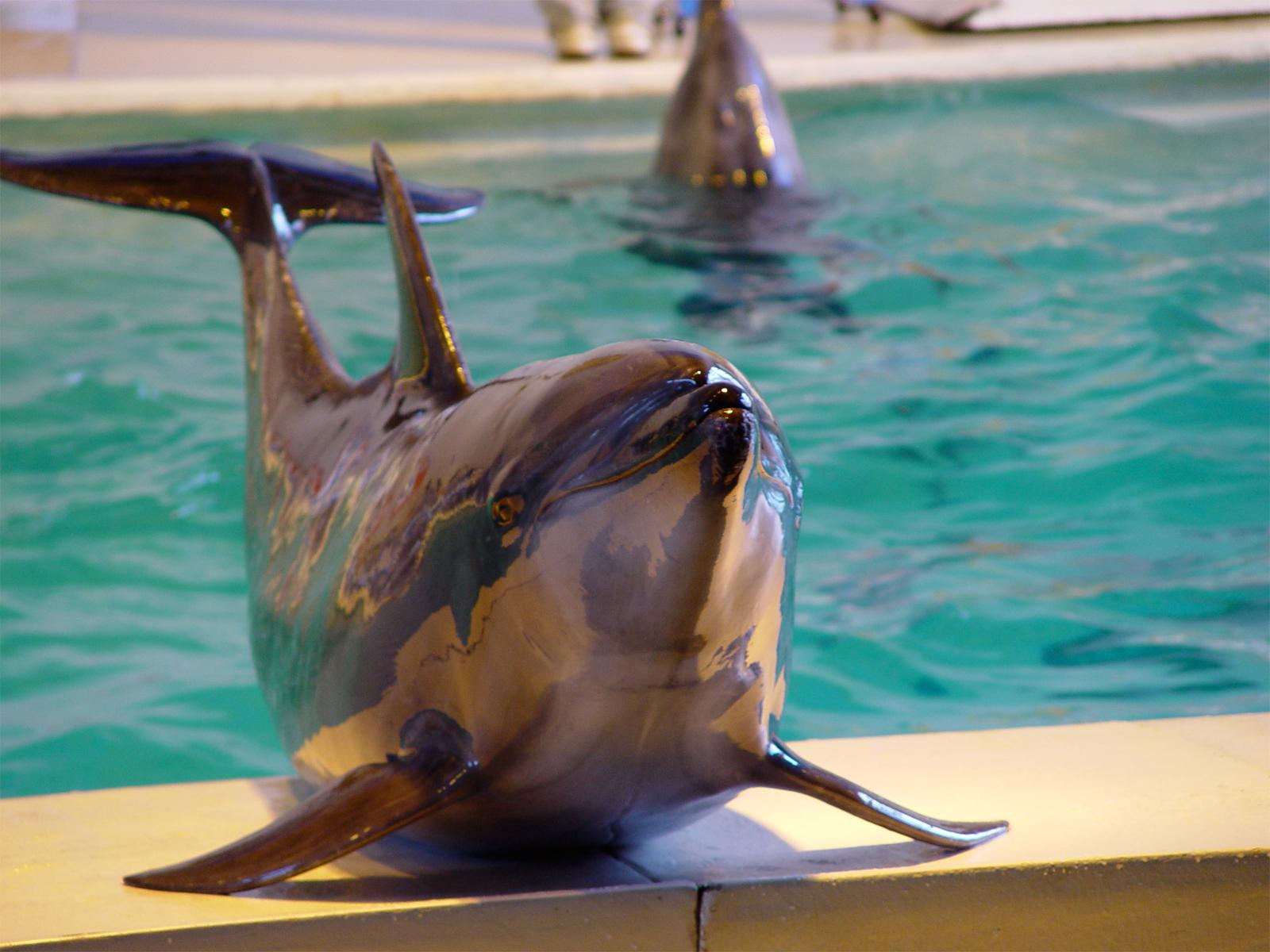 水族館のイルカの画像